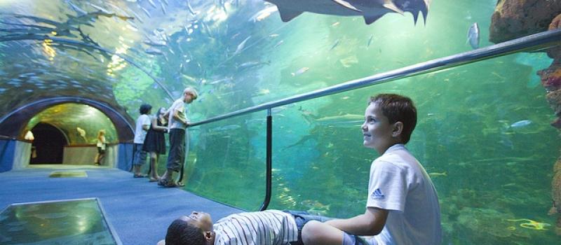 hostel-san-sebastian-aquarium